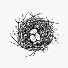 Hand Drawn Nest Illustration