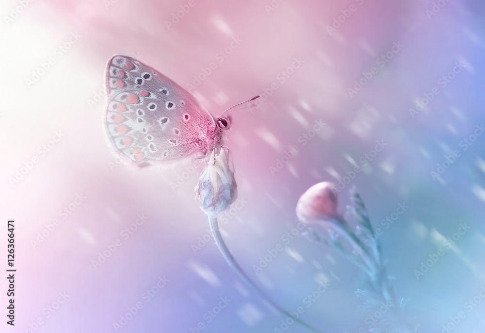 Fototapety, obrazy: Beautiful delicate elegant butterfly on a flower with a soft focus on the blurry blue and pink background in the rays of light. Dreamy romantic artistic image spring or summer..