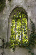 Afternoon Sunlight Streams Through The Ruined Window Of An Ancient Gothic Church Overgrown With Green Ivy
