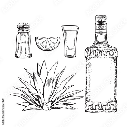 Fotografie, Obraz  Set black and white of tequila bottle, shot, salt mill, agave and slice lime, sketch vector illustration isolated on background