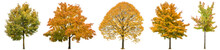 Autumn Trees Isolated White Background Oak Maple Linden