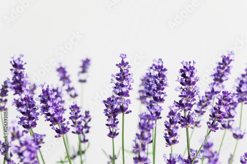 Spoed Fotobehang Lavendel Lavendel (Lavandula), Raum für Text, Studio
