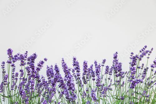 Foto op Canvas Lavendel Lavendel (Lavandula), Raum für Text, Studio