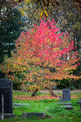 Wall Murals Cemetery Autumnal Colours in a Grave Yard