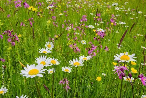 Blumenwiese und Frühlingswiese Wallpaper Mural