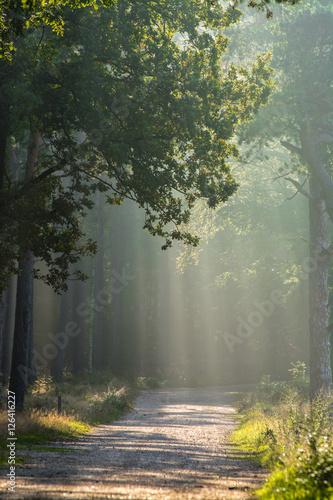 Poster Forets Morning light