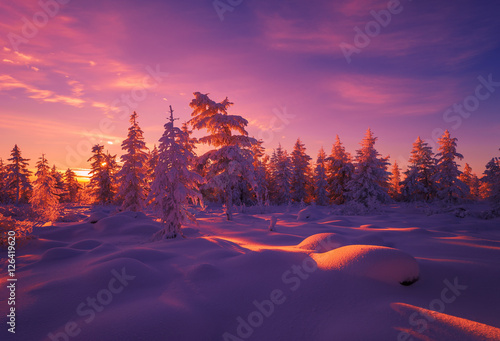 Photo sur Toile Aubergine Winter landscape with forest, sun and snow.
