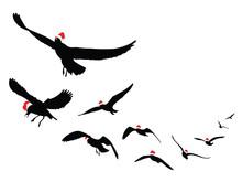 Seagulls Silhouette Wearing Sa...