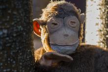 Monkey Doll Closeup