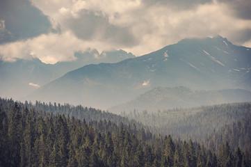 Fototapeta Mountain forest covered by fog