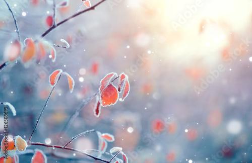Aluminium Prints Autumn Winter nature background. Frozen branch with leaves closeup