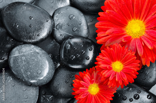 Photo  flower on black pebbles in water drops as background
