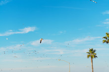 Seagulls Flying Over Palm Tree...