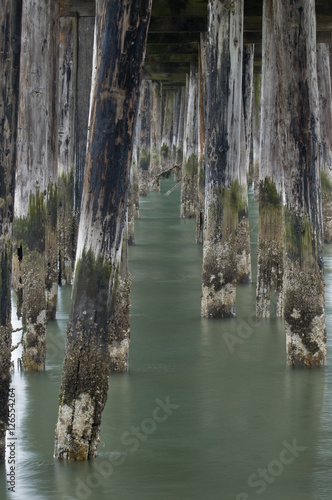 Rotting Pilings at Ocean Pier, Half Moon Bay Canvas Print