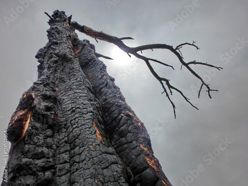 Fotografie, Obraz  Scary dead burned tree against cloudy sky