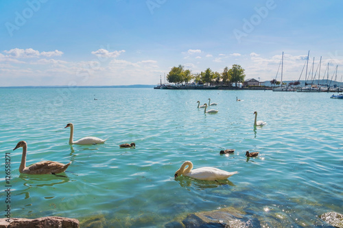 Photo  Port of Balatonfured and Lake Balaton with swans, Hungary