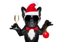Santa Claus Christmas Dog
