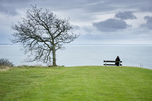 Alone Woman Is Sitting On The Bench By The Tree Over The Blue Sea.