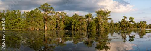 Fotografie, Obraz  Louisiana Swamp Panoama