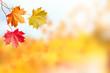 Autumn landscape. Beautiful leaves. Colorful trees