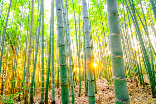 Poster Bambou Bamboo forest with sunny in morning