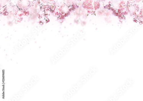 Tuinposter Kersenbloesem 桜の背景 春イメージ