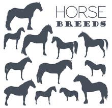 Horse Breeding Icon Set. Farm Animal. Flat Design