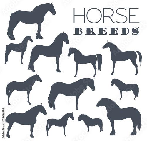 Valokuva Horse breeding icon set. Farm animal. Flat design
