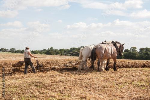Fotografia, Obraz  Chevaux percheron et laboureur aux champs