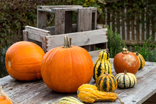 Pumpkins On Wooden Table 3