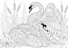 Stylized Couple Of Two Swans Among Lotus Flowers (water Lilies) And Pond Plants. Freehand Sketch For Adult Anti Stress Coloring Book Page With Doodle And Zentangle Elements.