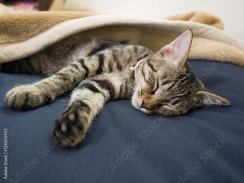 子猫の昼寝 Tablou Canvas
