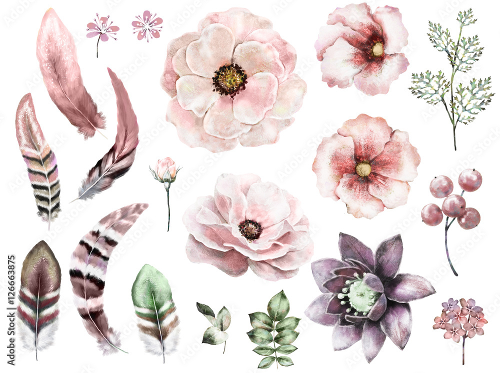 Set vintage watercolor elements of rose, collection garden and wild flowers, leaves,  illustration isolated, bird feathers, berry, herbs,  tribal, ethnic, indian style