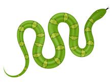 Green Snake Vector Illustration. Isolated Serpent On White Background