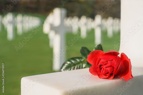 Fotomural Liebesbeweis rote Rose liegt auf dem Grabkreuz eines Soldaten -  Love red rose r