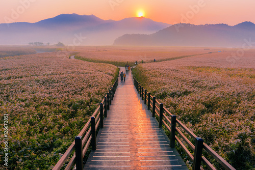 Wooden bridge Sunrise landscape at Suncheon bay Korea