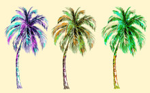 Tropical Palm Trees, Vector Isolated