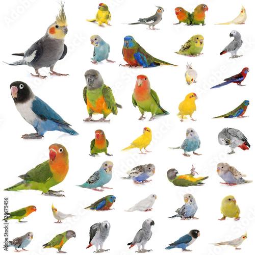 Fond de hotte en verre imprimé Perroquets group of parrots