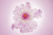 canvas print picture white and pink flower in a pale pink cloud