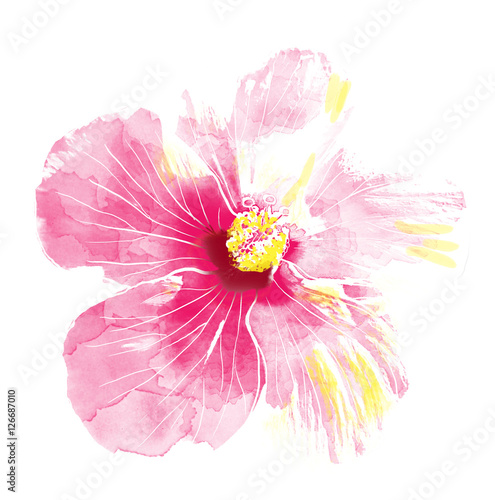 Pink hibiscus flower,watercolor.