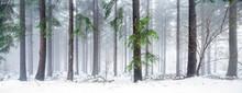 Verschneiter Wald Im Winter Als Panorama