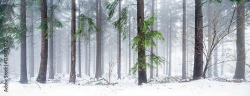 Fototapeten Wald Verschneiter Wald im Winter als Panorama