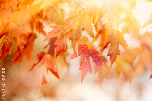 Ingelijste posters Herfst Autumn Thanksgiving Leaves Background