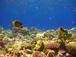 Unterwasser-Landschaft