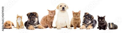 Staande foto Kip set pets