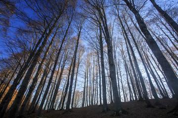 Passo di Forca d'acero in autunno, un bosco tra Lazio e Abruzzo. Alberi, rocce e mille colori della natura
