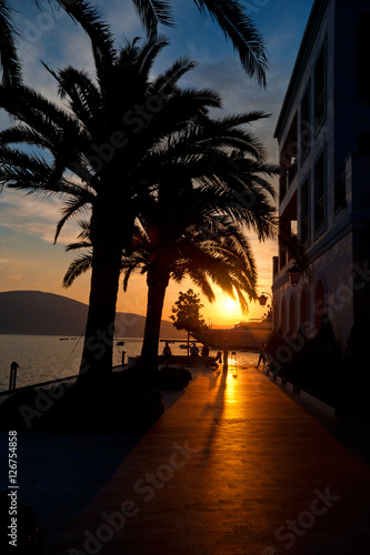 Fototapeta Sunset palms in Porto Montenegro obraz na płótnie