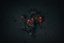 Rose Buried In Ashes