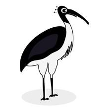 Ibis Black White Bird