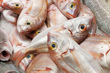 Small Red Sea Bream Fishes On A Market Tray
